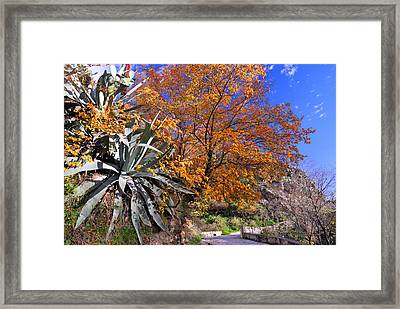 The Old Bridge In Automn Framed Print by Guido Montanes Castillo
