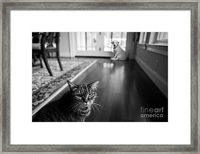The Old Cat And The New Puppy Framed Print by Diane Diederich