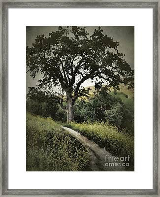 The Old Chumash Trail Framed Print
