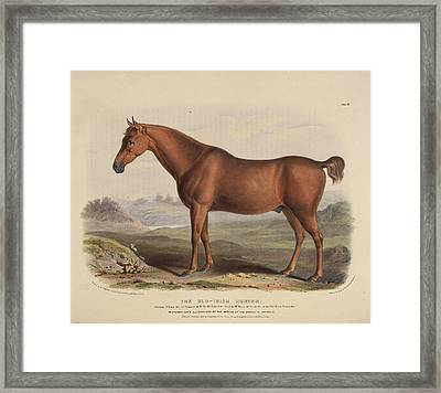 The Old English Black Horse Framed Print by British Library