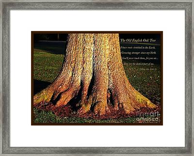 The Old English Oak Tree Framed Print