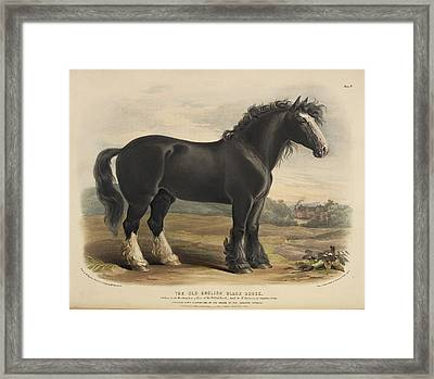 The Old Irish Hunter Framed Print by British Library