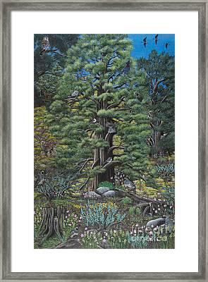 The Old Juniper Tree Framed Print
