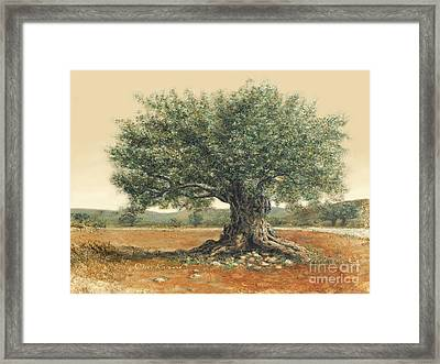 The  Old Olive Tree. By Miki Karni Framed Print
