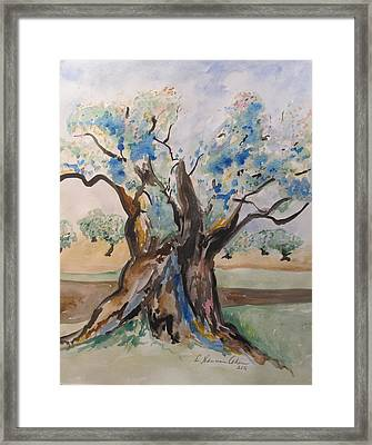 The Old Olive Tree Framed Print