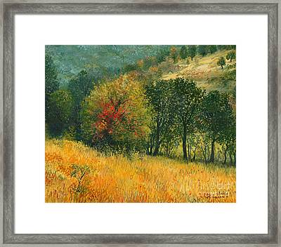 The Old Pear Framed Print by Kiril Stanchev