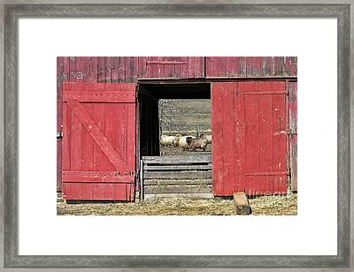 The Old Sheep Barn Framed Print by Olivier Le Queinec