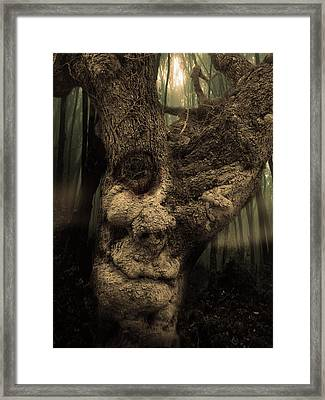 The Old Treant Framed Print