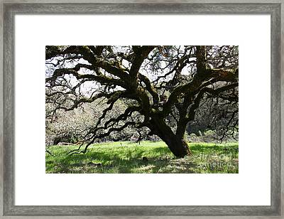 The Old Tree 5d22147 Framed Print by Wingsdomain Art and Photography