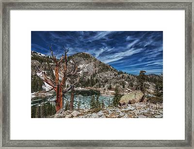 The Old Tree And Lake Mary Framed Print by Mitch Johanson