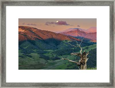 The Old Tree And Setting Moon With Mt Diablo Framed Print by Marc Crumpler