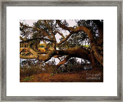 The Old Tree At The Ashley River In Charleston Framed Print