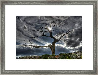 Life In The Slow Lane Framed Print by Bob Christopher