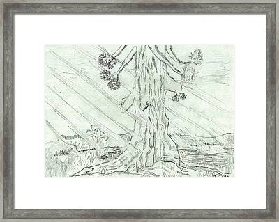 The Old Tree In Spring Light  - Sketch Framed Print by Felicia Tica