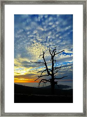 The Old Tree Framed Print by Metro DC Photography