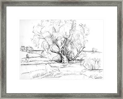 The Old Willow Tree Framed Print