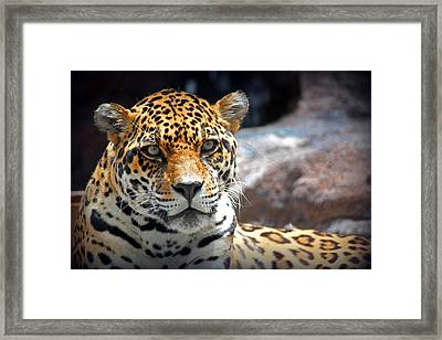 The Ole Leopard Don't Change His Spots Framed Print by Lynn Sprowl