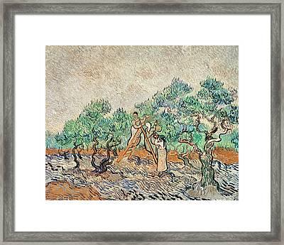 The Olive Orchard, 1889  Framed Print by Vincent van Gogh