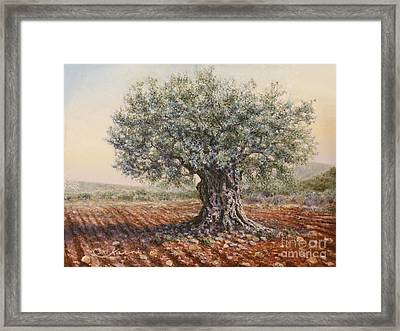The Olive Tree In The Valley Framed Print