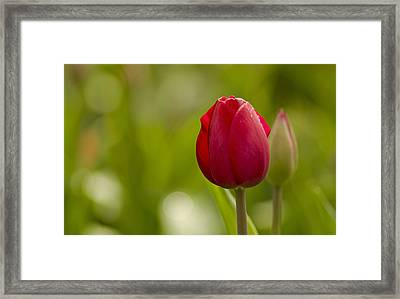 The One Framed Print by Nick  Boren