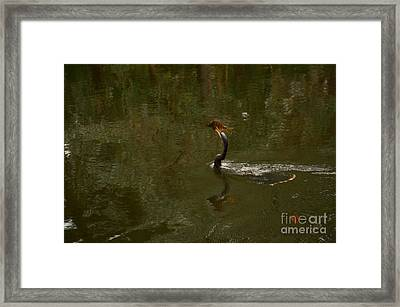 The One That Didn't Get Away Framed Print by Jim Cook