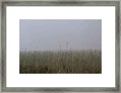 The Onion Field Framed Print