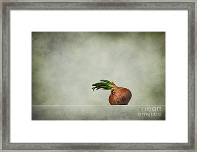 The Onions Framed Print by Diana Kraleva