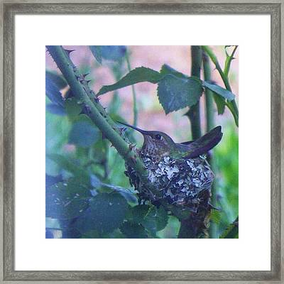 The Only Way To Get A Photo Of The Framed Print by Blenda Studio