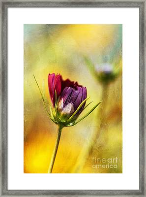 The Opening Framed Print by Darren Fisher