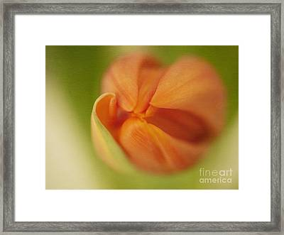 The Opening Framed Print