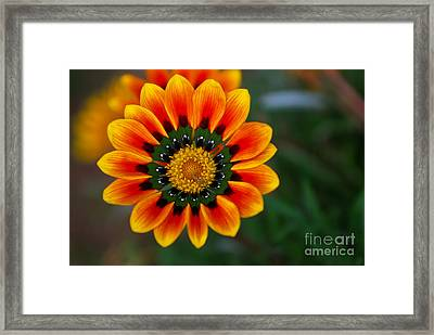The Orange Artwork Framed Print by Syed Aqueel