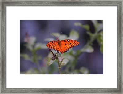 The Orange Wings Framed Print
