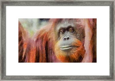 The Orangutan Framed Print