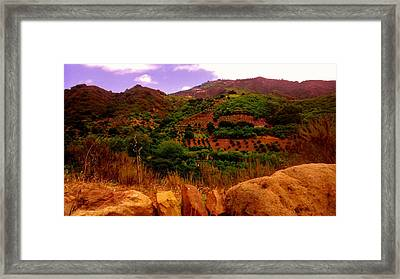 The Orchards Framed Print by Sharon Costa