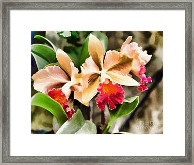 The Orchid Framed Print by G Sugal