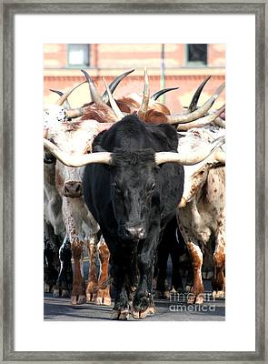 The Original Texas Longhorn Framed Print by Jennifer Mecca