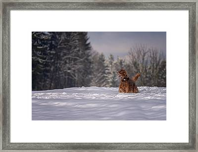 The Other Me Framed Print by Robert Krajnc