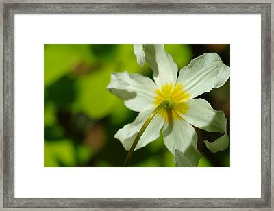 The Other Side Of Beauty Framed Print by Jeff Swan