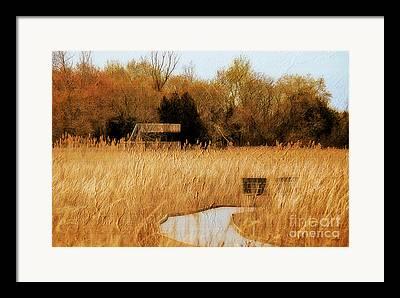Golden Marsh Framed Prints