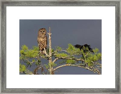 The Owl And The Crow Framed Print by Steve Petersen