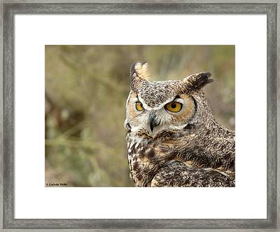 Framed Print featuring the photograph The Owl by Lucinda Walter