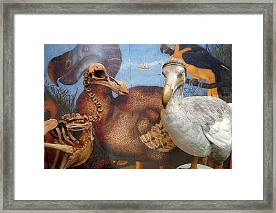 The Oxford Dodo Framed Print
