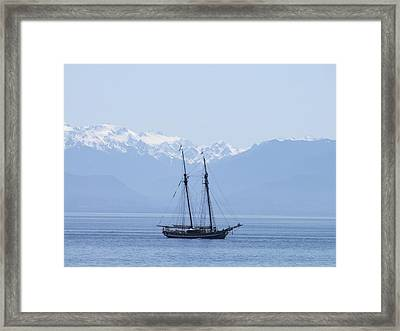 The Pacific Swift Framed Print
