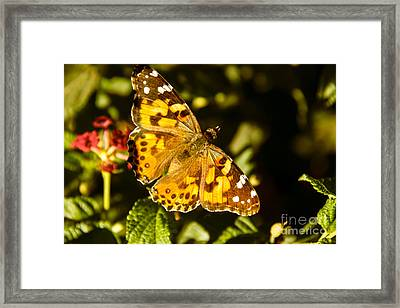 The Painted Lady Framed Print by Robert Bales