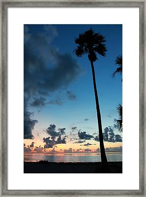 The Palm Majestic Sunset Beach Tarpon Springs Florida Framed Print