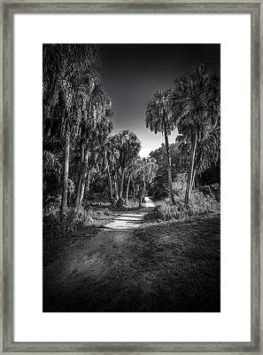 The Palm Trail B/w Framed Print by Marvin Spates