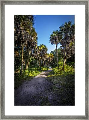 The Palm Trail Framed Print