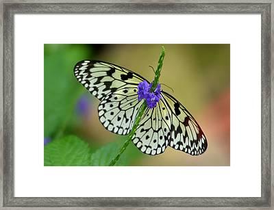 The Paper Kite Butterly Framed Print