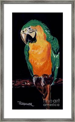 The Parrot Framed Print by Joyce Gebauer