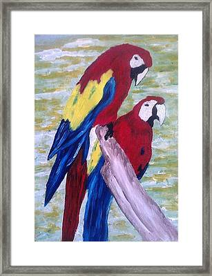 The Parrots Framed Print by Kevin Chimasia